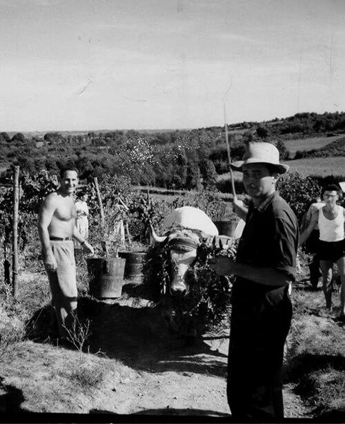 laplace madiran 1927