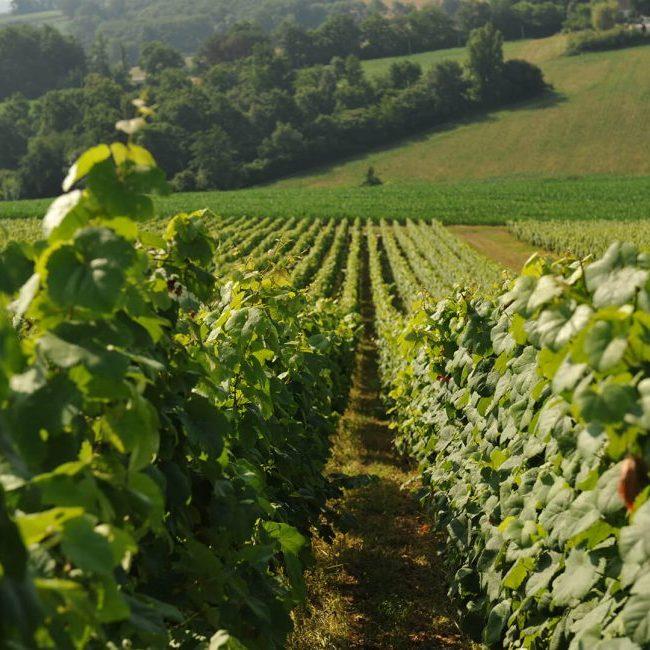 vignes madiran famille laplace